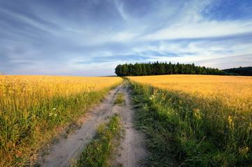 Krajobraz wiejski, dojrzewanie zboża
