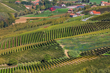 Autumnal vineyards in Piedmont, Northern Italy.