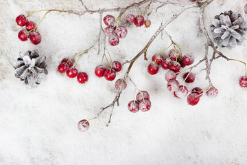 Christmas branch with berries