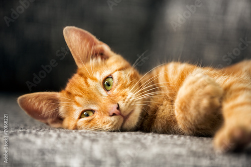 canvas print picture Portrait of cute kitten