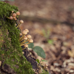 little mushrooms growing on a dead tree covered by moss in a for