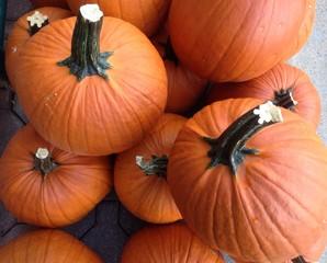 large pumpkins for Halloween