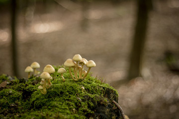 little lovely mushroom growing in a dead tree covered of moss in