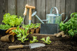 Gardening - 70174020