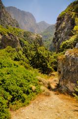Wild valley lush vegetation. Megalo Seitani, Samos