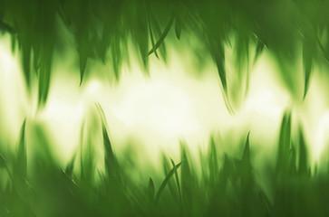 Green vibrant grass background