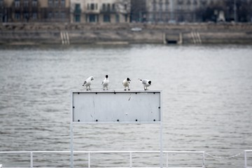Seagulls sitting on sign