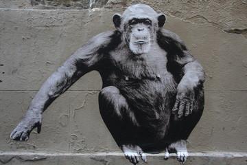 Singe Graffiti