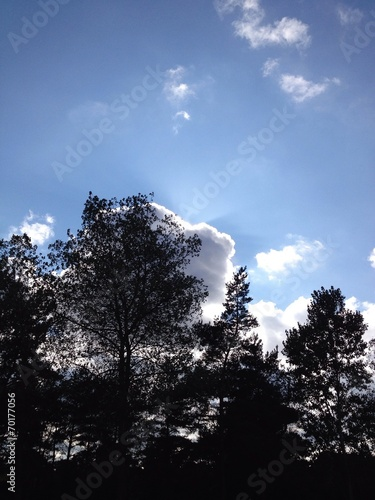 canvas print picture sun behind clouds and trees