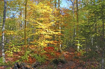 Autumn foliage - Fall colors in Northeast USA