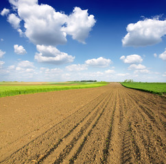 plowed field and blue sky