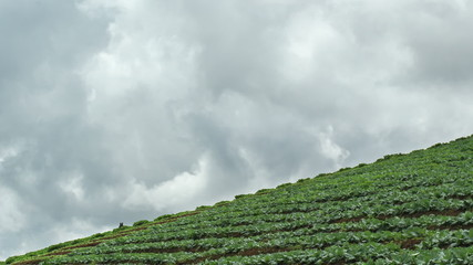 Time lapse of terraced vegetable field , Chiangmai Thailand.