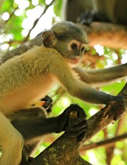 The Cuty Monkey on the tree in thailand