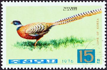 Reeves's Pheasant (North Korea 1976)