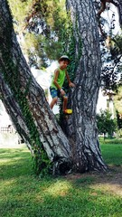 summer in the park boy in hat and shorts climbs trees