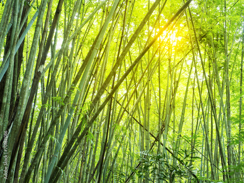 Foto op Plexiglas Bamboe bamboo forest in tropical