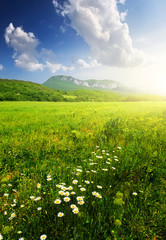 Field with flowers in summer time. Beautiful summer landscape