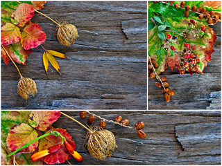 Collage of fall, winter foliage.