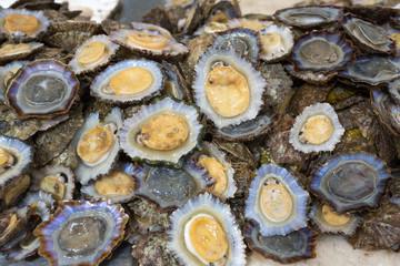 Napfmuscheln auf einem Fischmarkt