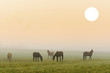 canvas print picture - Pferde Nebel Morgenstimmung