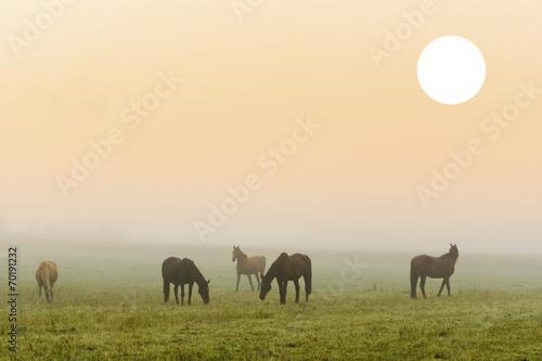 canvas print picture Pferde Nebel Morgenstimmung