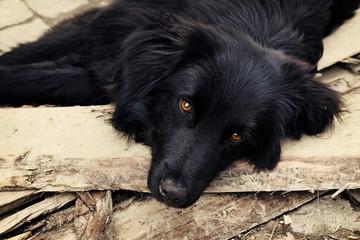 Sad black dog is laying on outdoors