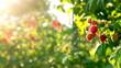 raspberry bush in slider shot