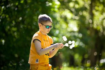 Мальчик летом на поляне собирает цветы одуванчики