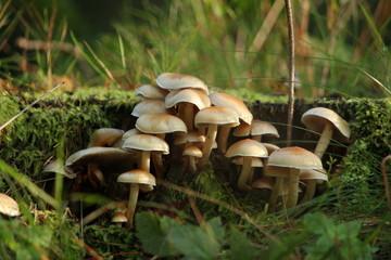 Waldpilz, Pilze, Wald, Baumpilz, Herbst