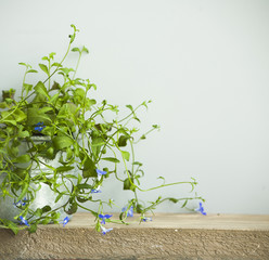 fresh flower growing in pot with old wooden background