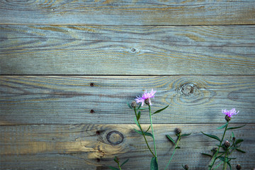pink flowers and with the old blue wooden fence