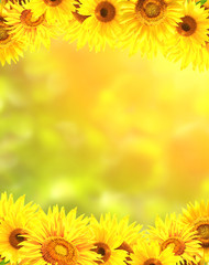 Frame with bright yellow sunflowers