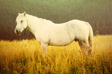 White horse grazes in the mountains