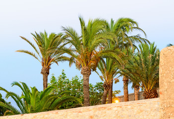 Beautiful palms, view from Peniscola castle in Spain