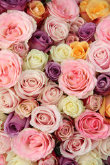 Wedding roses in pastel colors