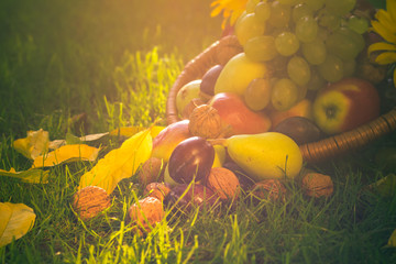 Basket full fruits grass sunset light