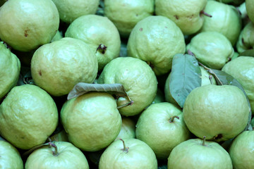 Green fresh Guava.