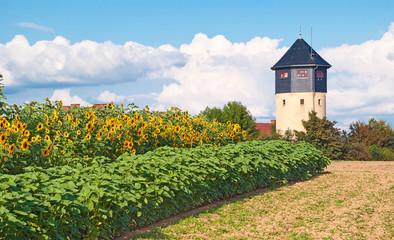 Sonnenblumenfeld am historischen Wsserturm von Bad Soden