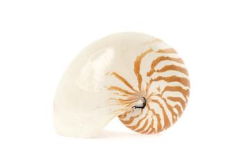 nautilus shell isolated on white