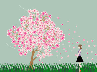 Woman is watching cherry blossom tree