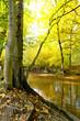 Leinwanddruck Bild - autumn scenery