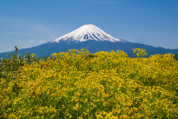 Mt. Fuji Seen From Kawaguchi Lake