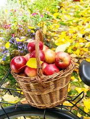 apples in wicker basket