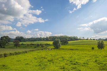 Meadow in sunlight in summer