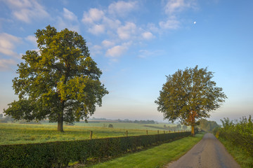 Tree along a road at dawn in summer