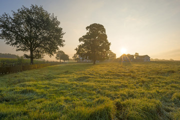 Meadow in the light of sunrise in summer
