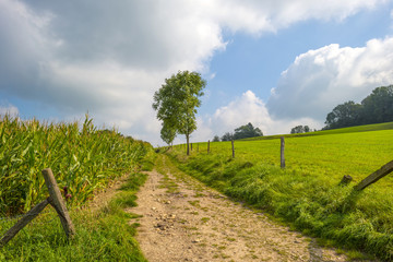 Dirt road through the countryside in summer