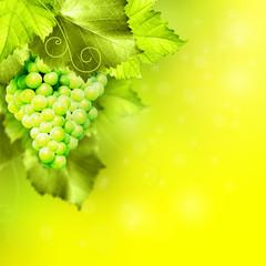 Weinanbaugebiet Hintergrund