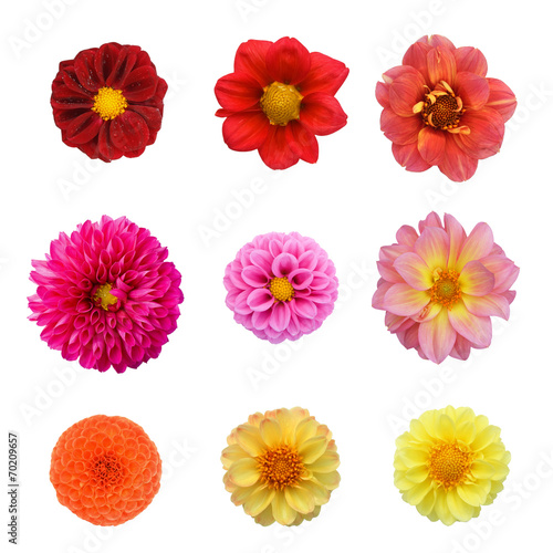 Foto op Aluminium Dahlia Set nine dahlias isolated on white background