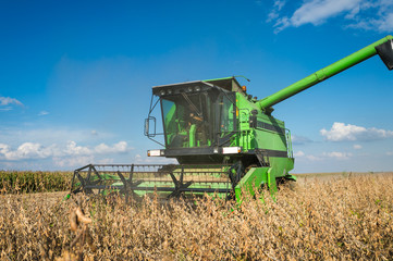 Harvesting soybean